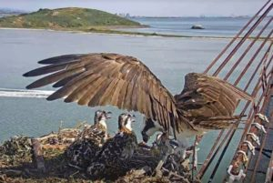 Osprey Expert Alan Poole at Riggers Loft @ Riggers Loft Wine Company | Richmond | CA